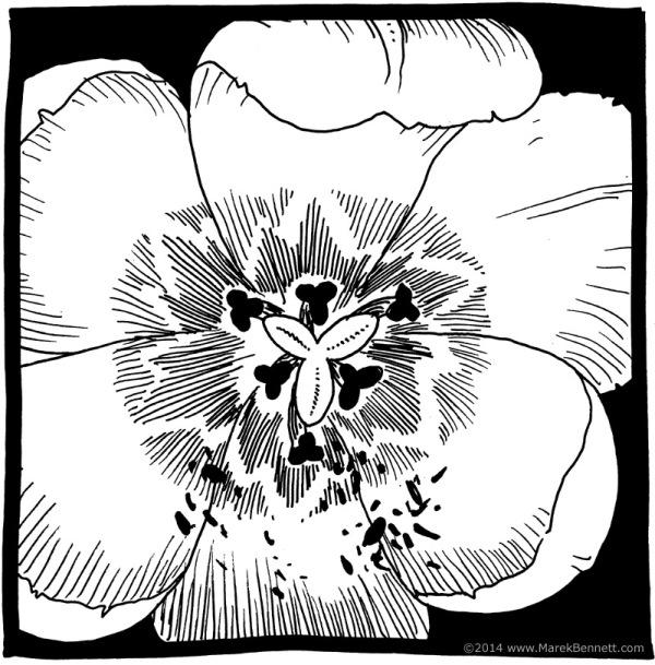 flower-02-www_MarekBennett_com